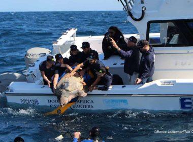 La tortue de mer nage 22 000 milles en 2 ans, laissant tous les autres dans son sillage